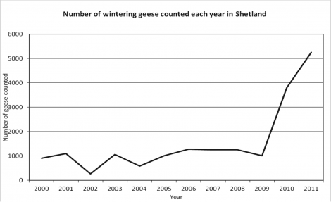 Number of wintering geese counted each year in Shetland.