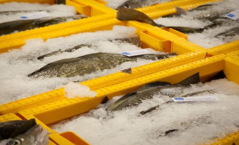 More than 200,000 boxes of fish have been landed in Shetland since the start of the year - Photo: Shetland Seafood Auctions