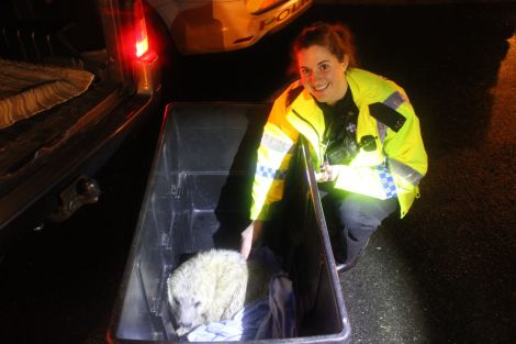 PC Victoria Duthie overcomes her fear of seals on Christmas morning. Photo Shetnews