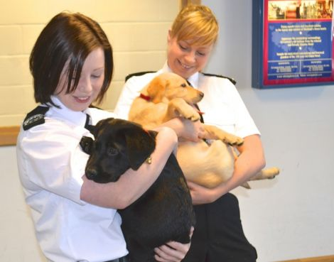 Louise and Terresa with the new Dogs Against Drugs puppies Thor and Zeus at Sumburgh airport this week. Photo BBC Radio Shetland