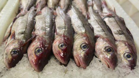 Haddock landed at Lerwick fish market.