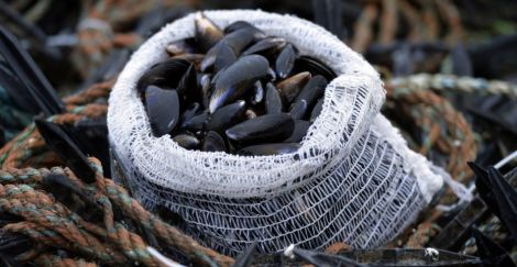 Photo Shetland Mussels