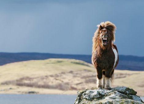'Shetland Smiler' by Elaine Tait.