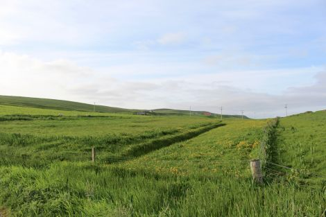 Some of the land which has been earmarked for the housing. Photo: Chris Cope/Shetland News