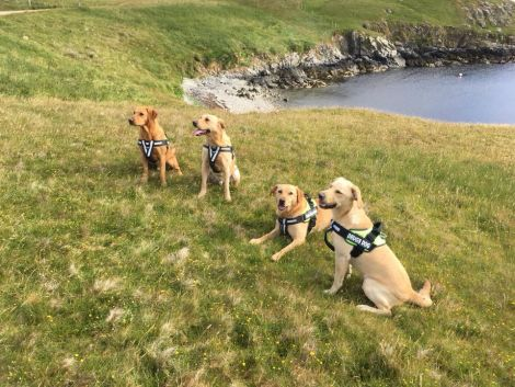Dogs Against Drugs' dogs (left to right): Blade, Axel, Thor and Odin.