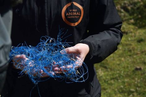 Monofilament netting is all too often the cause for death in marine wildlife.